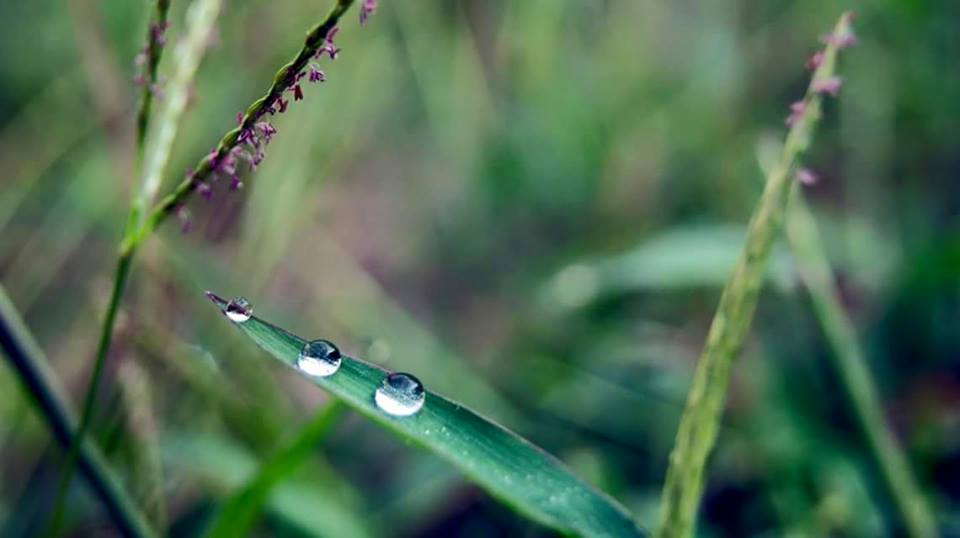 Dew Drops on a blade of grass. by MoonGazer9
