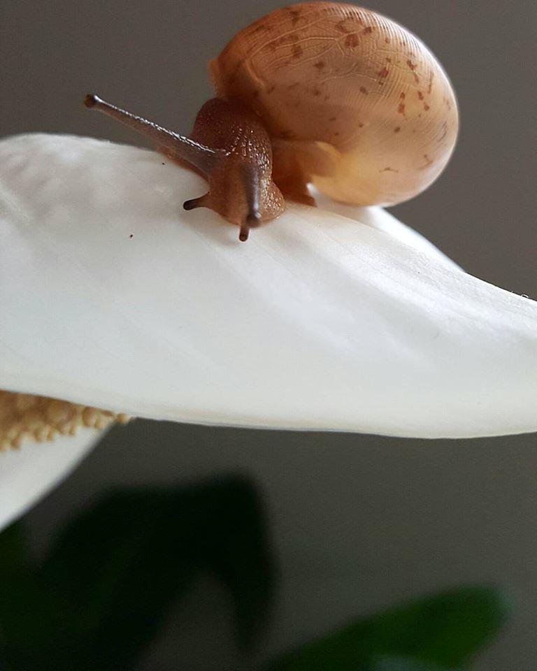 snail by MoonGazer9