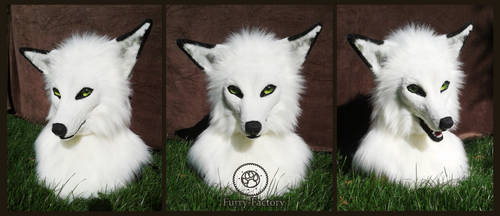 White fox head by Kay-Ra