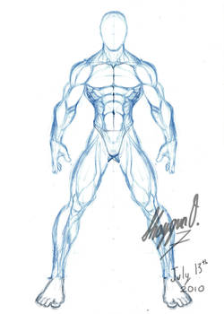 Male Anatomy Template: Front