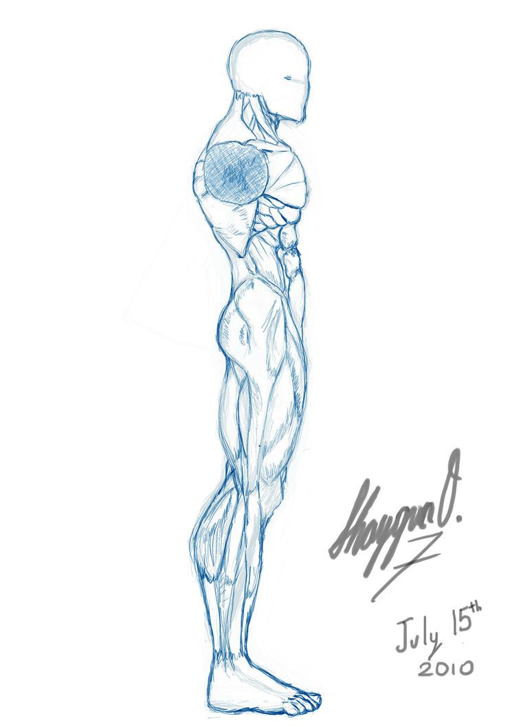 Male Anatomy Template Side By Shintenzu On Deviantart