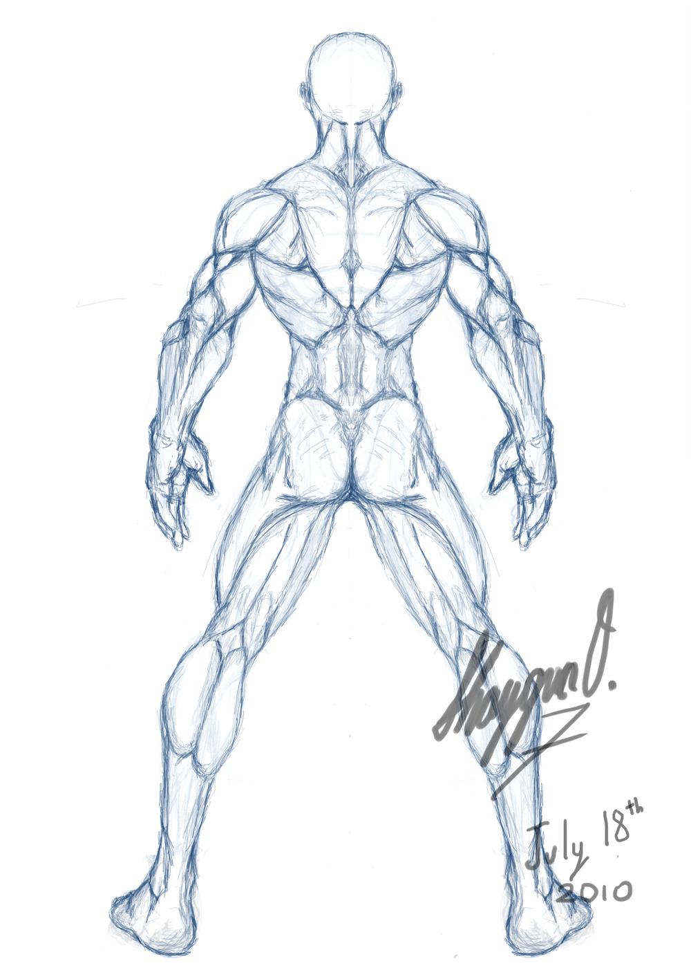 Male Anatomy Template: Back by Shintenzu