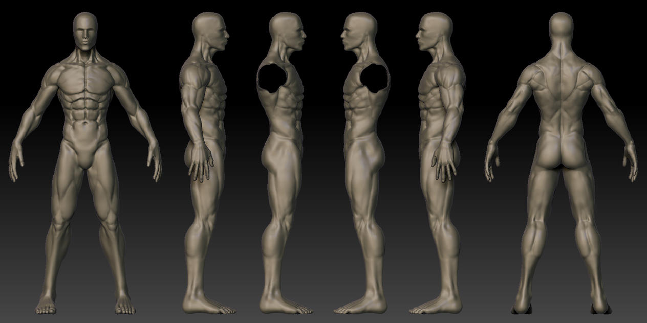 Male 3D Anatomy Template by Shintenzu