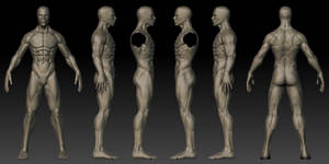 Male 3D Anatomy Template