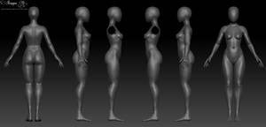Female 3D Anatomy Template
