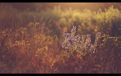 As sun sets.. by biq