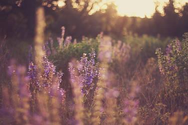 Purple sunset by biq