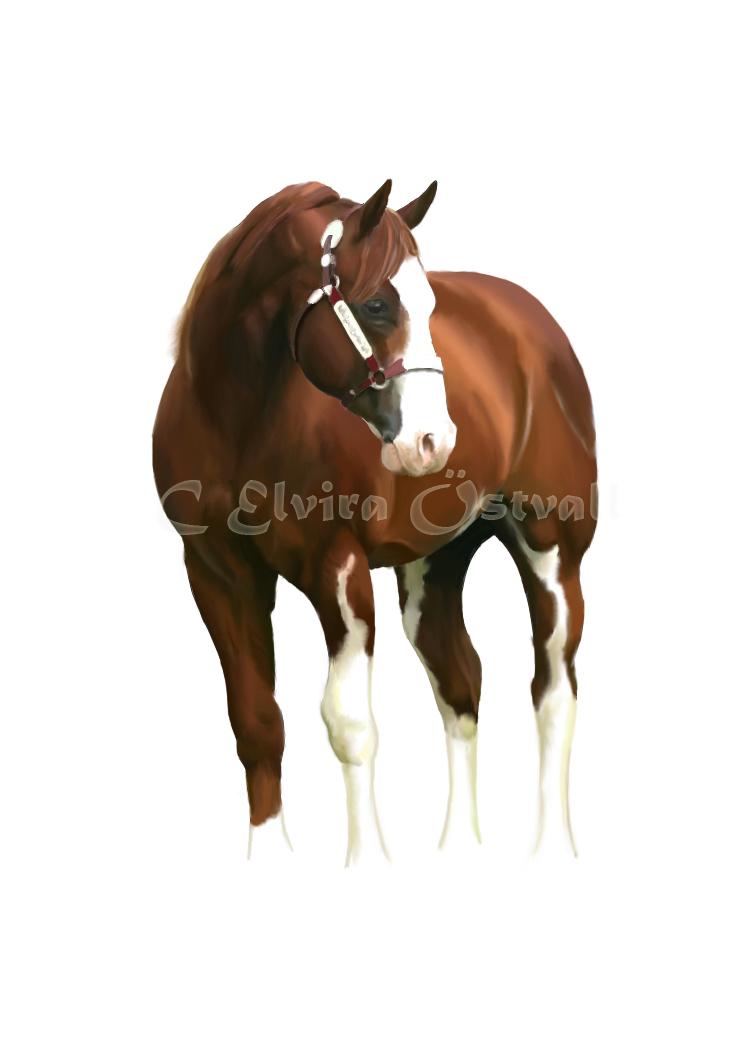 Painted stallion by Suspirias
