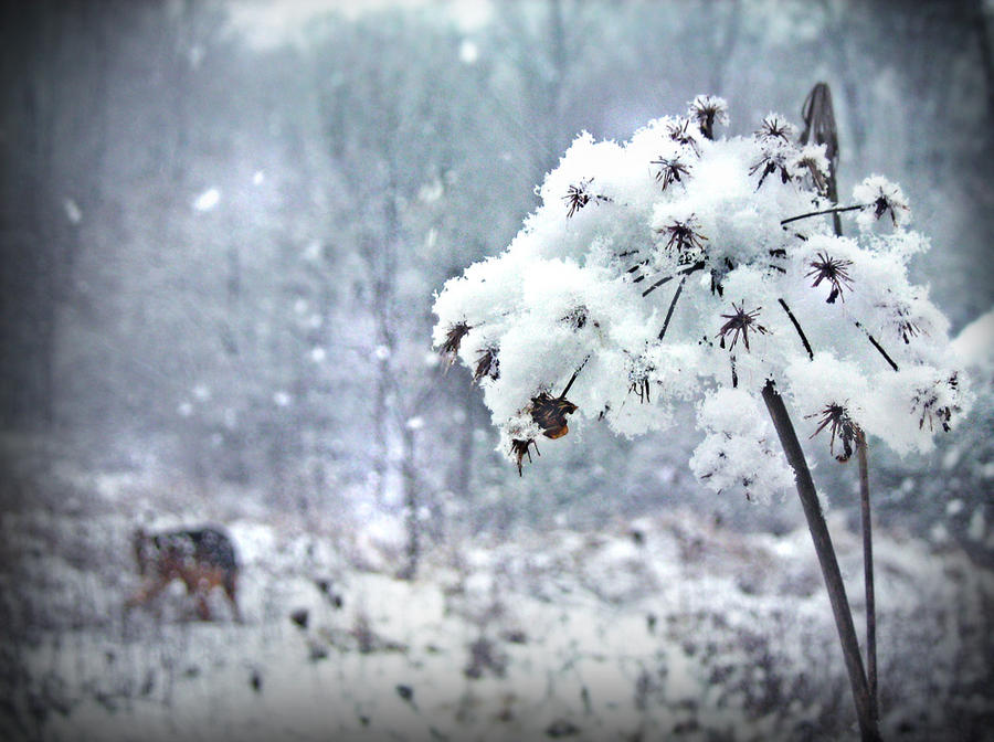 winter flower by kosijenka on deviantart, Beautiful flower