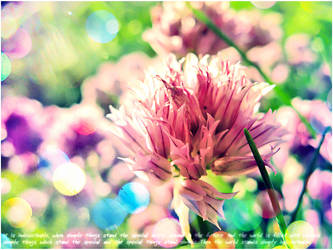Simple things: flower by CitiSwallow