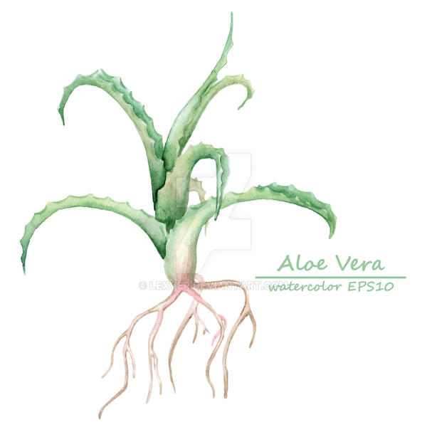 Vector aloe vera branch by lexver on deviantart