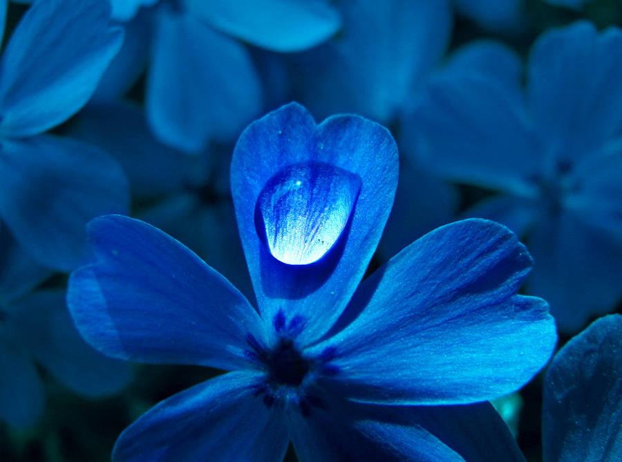 Flower Blues by MeganLeeRetouching