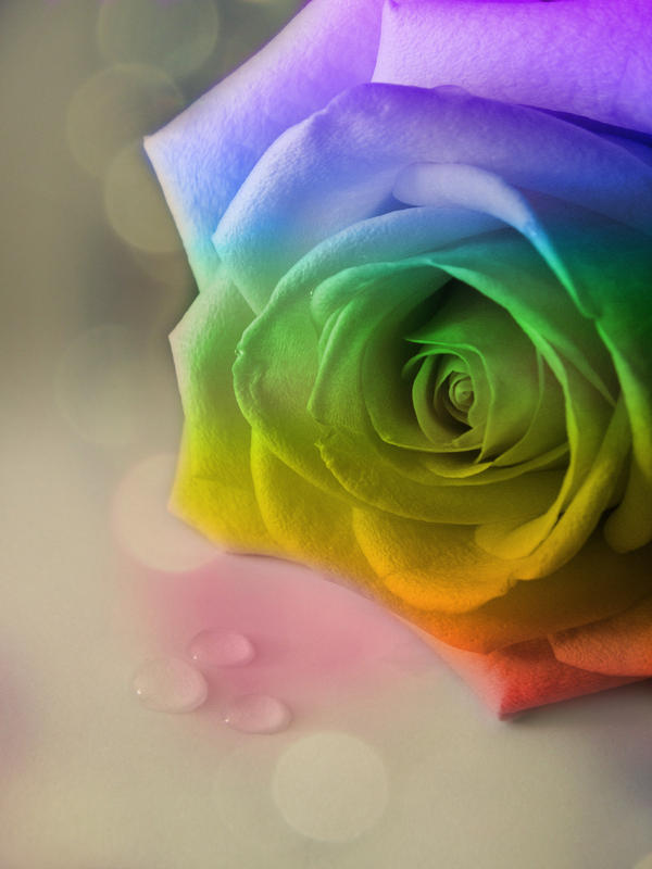 Dannygoedicke 39 s deviantart favourites for Rainbow dyed roses
