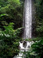Rainforest by Disj0inted-Princess