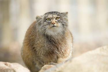 I'm not fat, I'm poofy by Fridooh