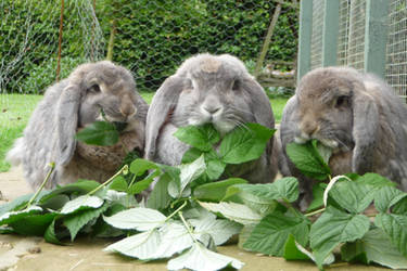 feast of rabbits