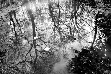 Black Winter's Tale by AnilTamerYilmazz