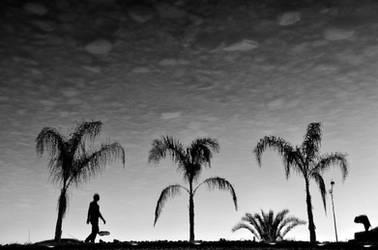 Tropical Reflections by AnilTamerYilmazz