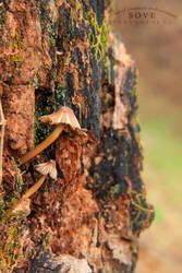Fungi by SOVEPhotography