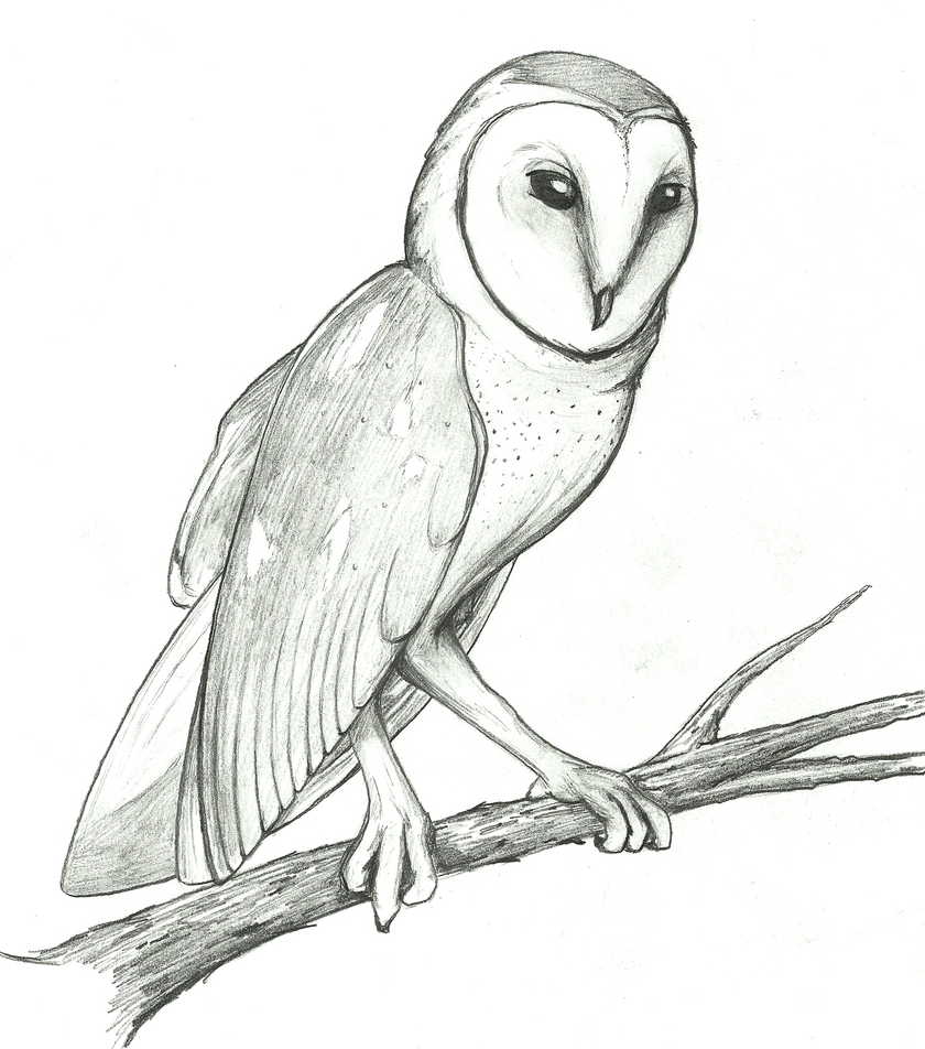 Barn Line Drawing Barn Owl Drawing