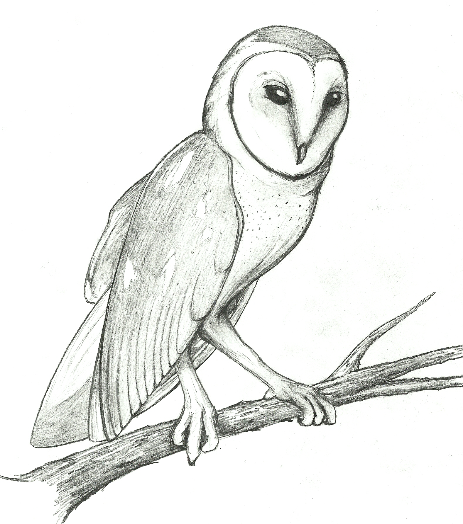 Barn Owl by boomythemc on DeviantArt