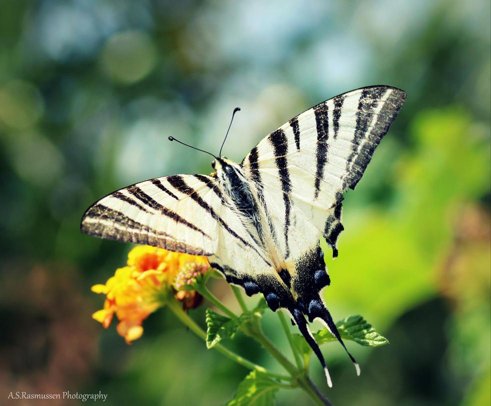 A Butterfly Kiss by photofreak385