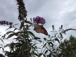 butterfly on bush