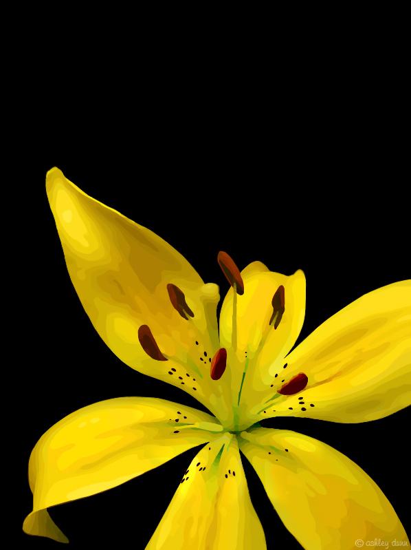 Sunshine Lily by ash-becca