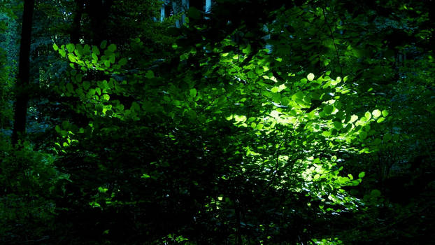 Sun at the woods by miropat