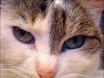 My cat Ashati