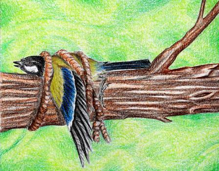 Tied up bird