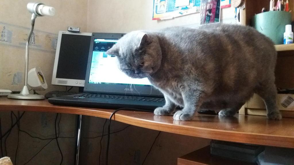 PC cat by KunYKA
