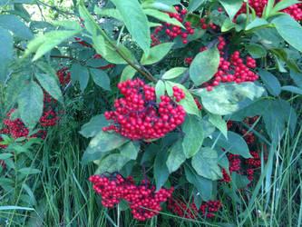 Sweety Raspberry by KunYKA