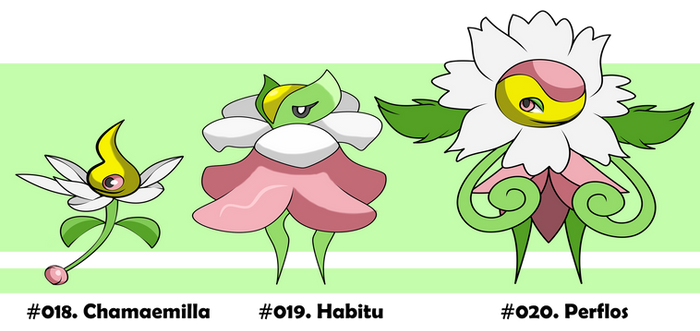 Vyshyvana Dex - Chamaemilla, Habitu and Perflos