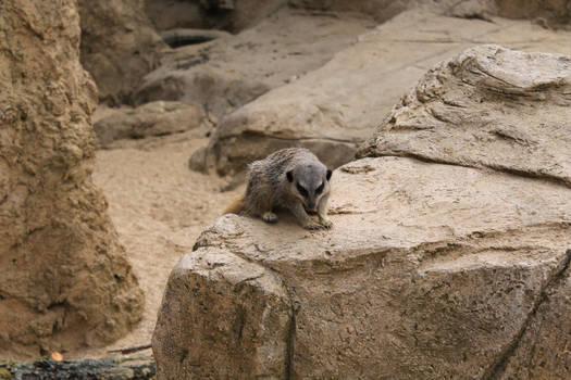 Meerkat Zero