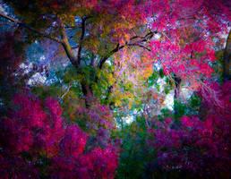 Kersbrook Hills Winery Autumn by FuriousEnnui