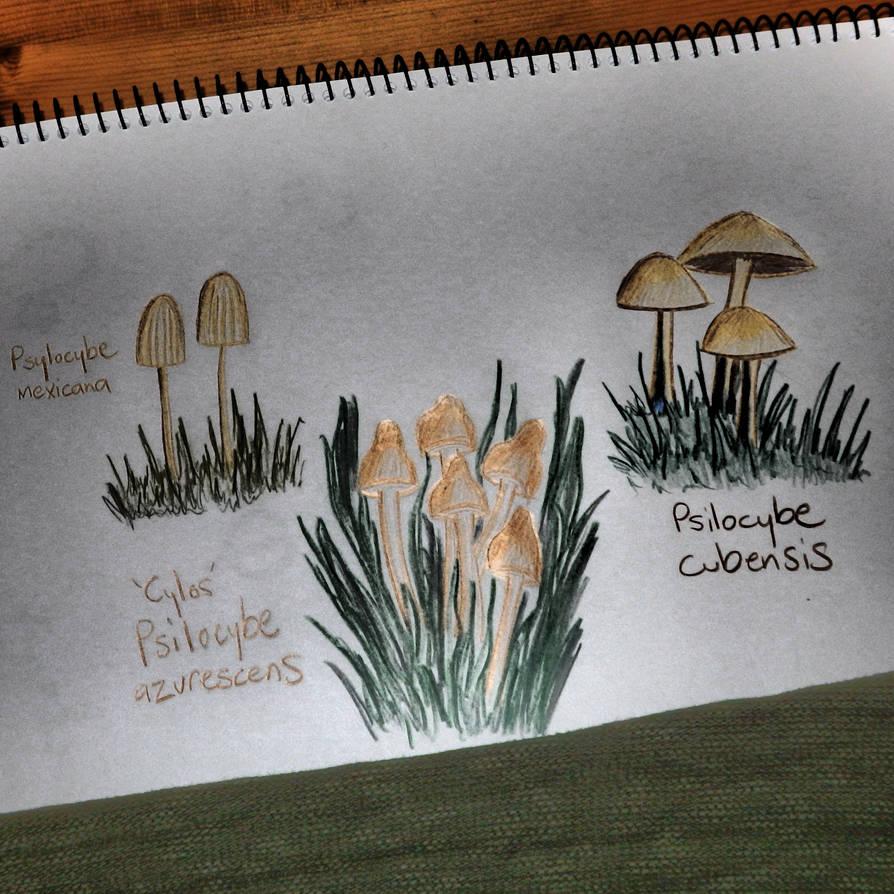 Mycelium Patch by RainbowGods on DeviantArt