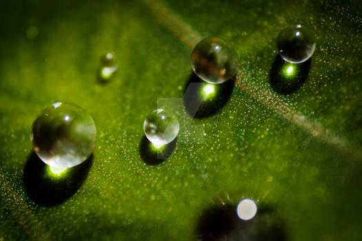 Green Rain