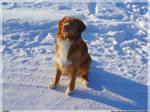 Doggy I by Sad-