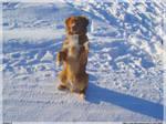 Doggy II by Sad-