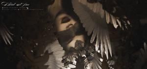 Bird by BchengYT