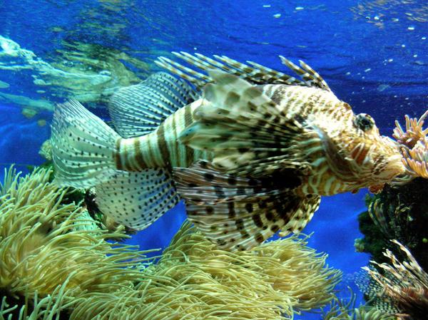Fishes of Monaco II by esharra