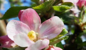 april fruits