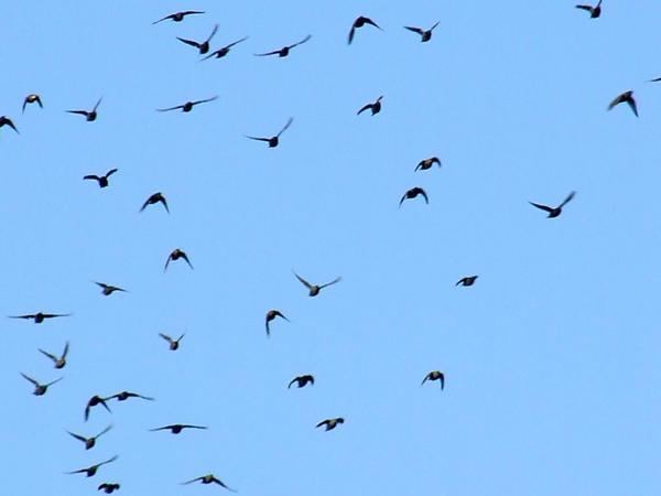 bird stock by fallen-again-stock