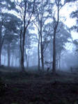 Mist forest stock 2
