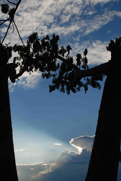 pohon yang bergandengan by donsnop