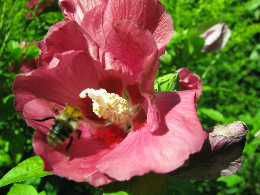 Nectar Nom