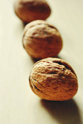 are you.. nuts? by assica