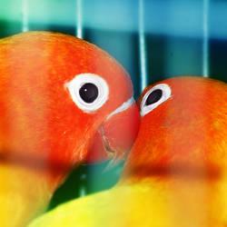 Lovebirds 2 by ClumsyCraft