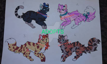 ADOPTS (2/4 OPEN)